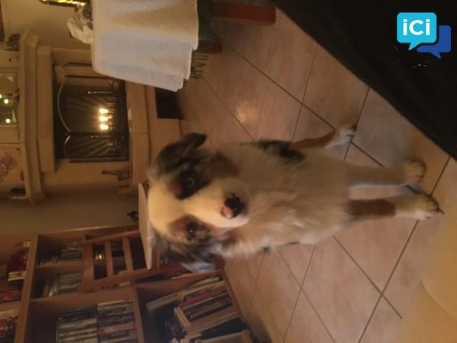 TOUTOU SAGE-Balade de votre chien