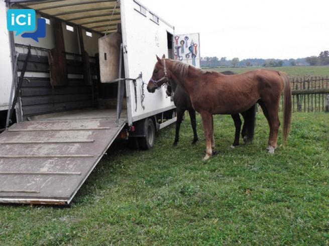 Camion de chevaux IVECO