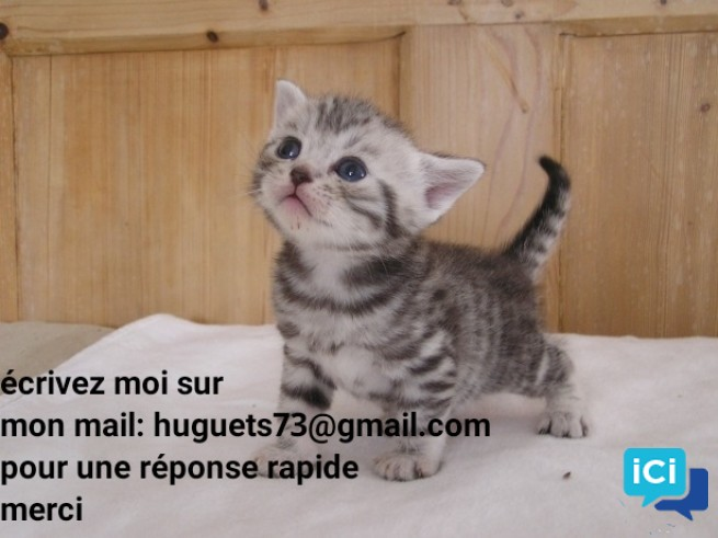 Don de 2 chaton de 3 mois